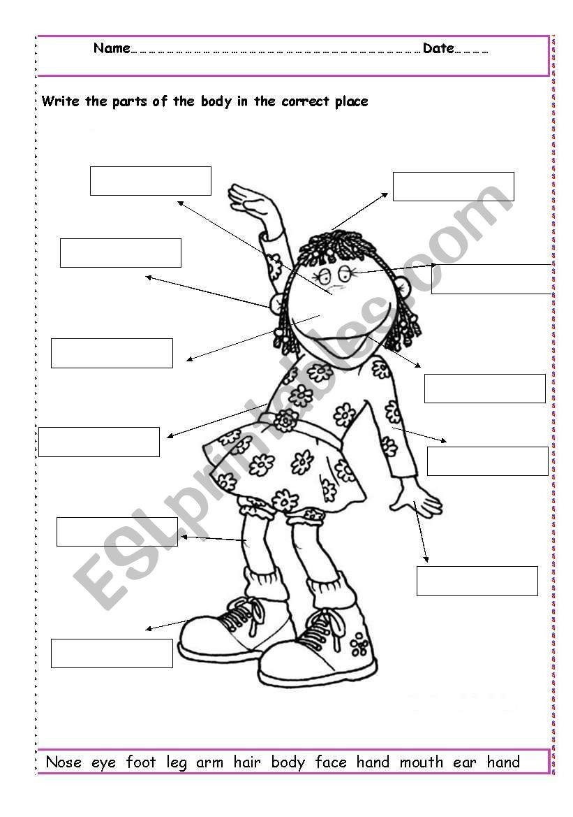 Body Parts Worksheet Kindergarten