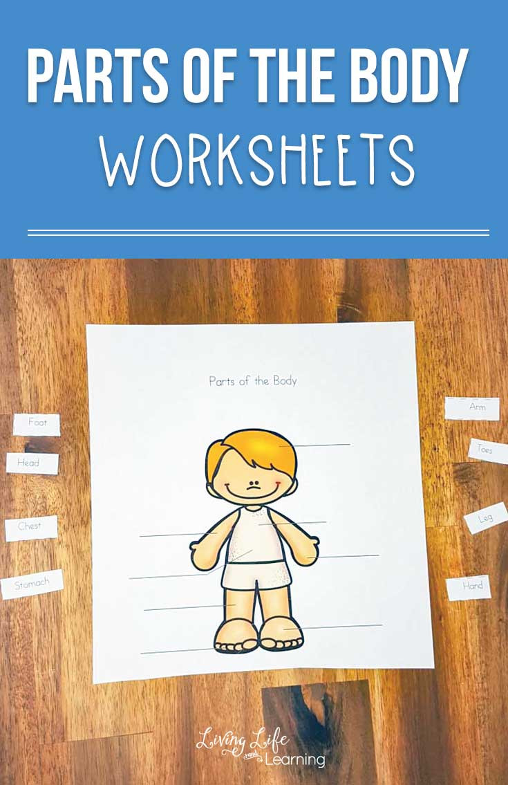 Body Parts Worksheets for Kindergarten