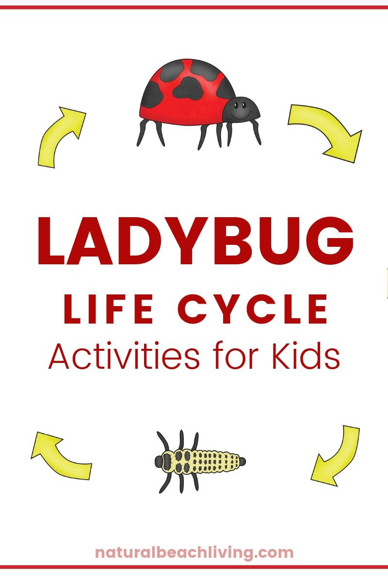 Ladybug Worksheets for Kindergarten