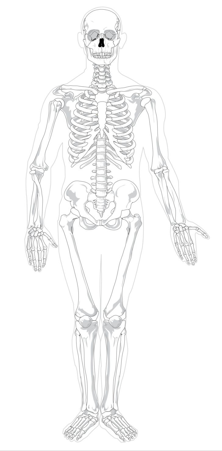 Free Printable Anatomy Worksheets